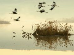 Cranes take flight in Israel's Hula Valley nature reserve in this National Geographic Photo of the Day.