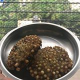 Shimla Mirch Besan Subzi is a modified, easier and healthier version of Capsicums stuffed with besan, a Rajasthani /Gujarati cuisine inspired dish Batata Vada, Sabudana Vada, My Sisters Place, Gujarati Cuisine, Real Simple, Sunday Morning, Diaries, Dog Food Recipes, Desi