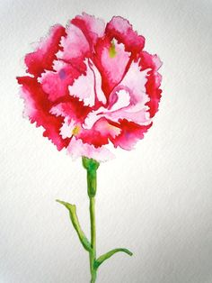 gamma phi beta.  pink carnation.