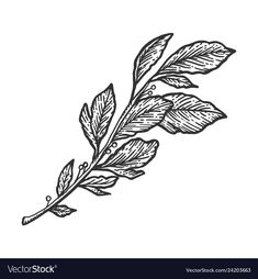 Branch Drawing, Laurus Nobilis, Leaves Vector, Tattoo Sketches, Tattoo Inspiration, Piercings, How To Draw Hands, Hand Drawn, Tattoos