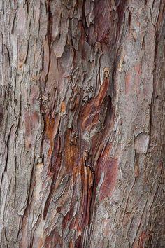 yew bark   Explore gloriana8's photos on Flickr. gloriana8 h…   Flickr - Photo Sharing!