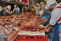 Westliche Ernährung schadet Mensch und Umwelt Tier, Food, Swiss Guard, Meat, Foods, Nature, Health, Eten, Meals
