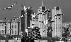 istanbul's eyes by Yaşar Koç - Photo 174966877 / 500px.  #500px #turkey #türkiye #bosphorus #istanbulboğazı #boğaz #boğaziçi #architecture #city #landscape #landscapes #travel #vacation #sea #seagull #seagulls #martı #martılar #simit #simitçi #simitvendor #streetfood #augsburg #münchen #ulm #stuttgart #frankfurt #istanbul #ankara #izmir