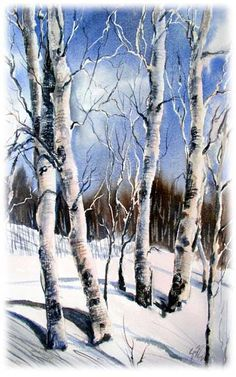 nature study, 'Aspens in Winter'