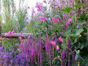 This is My garden!!!!!