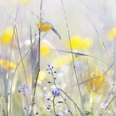 Fleurs et douceur