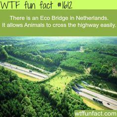 Eco bridge in the Netherlands -WTF fun facts I WANT TO GO!! Tja, ziet er vanuit de lucht idd leuker uit dan wanneer je er onderdoor moet..