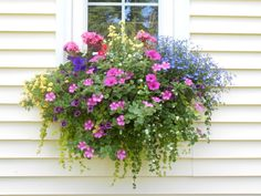Window Boxes and Container Gardening by goosegirl : HGTVGardens