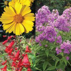 Cutting Garden -- Bluestone Perennials Cut Flowers, Fresh Flowers, Grace Kitchen, Paradise Plant, Outdoor Projects, Flower Beds, Outdoor Gardens, Perennials, Garden Design