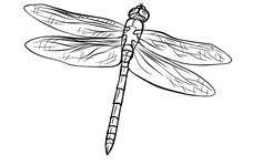 click to see printable version of green darner dragonfly coloring