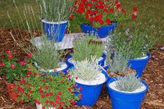 Lavender:How to grow in containers.   With these tips, anyone can grow lavender