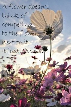 a flower doesn't think of competing to the flower next to it. It just blooms. motivation