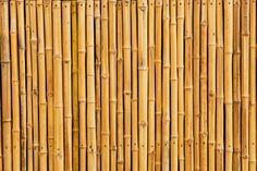 Bamboo-18.jpg (2863×1909)