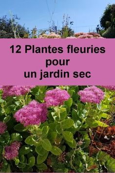 Perennials without watering - . 12 Perennials without watering - . 12 Perennials without watering - . Wonderful Flowers, Beautiful Flowers Garden, Back Gardens, Outdoor Gardens, Garden Storage Shed, Organic Gardening Tips, Vegetable Gardening, Plantar, Drought Tolerant