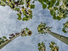 sunflowers von Michael Farnschläder