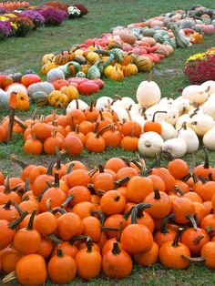 Pumpkins, Pumpkins and More Pumpkins! | A Homemade Living