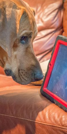 Did you know there are games on your smartphone made specifically for cats and dogs? Head over to Petcentric.com to check out some of the fun apps Will found for Eko and Penny to play with on rainy days when they're stuck inside!