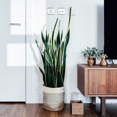 The best air-purifying plants that will survive life in an office Which indoor plants are best suite Ficus Elastica, Indoor Garden, Garden Plants, Indoor Plants, Green Garden, Elle Decor, Best Air Purifying Plants, Living Room Plants