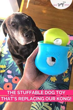 If you're familiar with the Kong, then you know how much dogs love to eat tasty treats out of a rubbery enrichment toy. There are a lot of stuffable dog toys available beyond the Kong! You can use these to mix up your enrichment routine with your dog or keep them busy indoors when you can't fit in a long walk.The West Paw Toppl is a stuffable dog toy with a wide opening that's perfect for filling with your dog's food, treats and natural chews. Brain Games For Dogs, Slow Feeder, Bully Sticks, Chocolate Labs, Labrador Retrievers, Interactive Toys, Find Pets, Dog Friends, Dog Mom