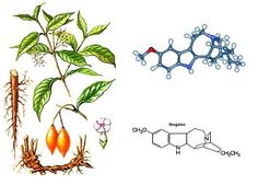 Ibogaine is an alkaloid derived from the iboga plant, a perennial rainforest shrub and hallucinogen native to western-central Africa. Description from fooyoh.com. I searched for this on bing.com/images