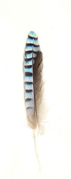 ☆ feather ☆