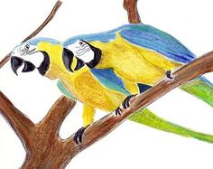 Popular items for macaw on Etsy