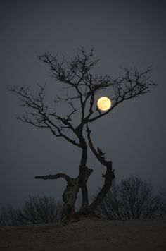 Feels like branch of tree is embracing the moon. 21 Breathtaking Images Of Moon That Will Make You Think If It's Real Or Not Moon Images, Moon Pictures, Pictures Of Trees, Foto Poster, Shoot The Moon, Good Night Moon, Beautiful Moon, Beautiful Scenery, Beautiful Things