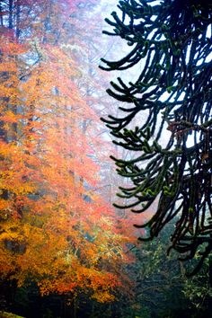 fall in shively park by jody miller A foggy morning in Astoria, Oregon.