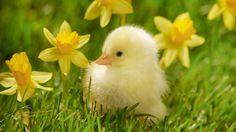 Hello my little chickadee