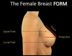 Breast Anatomy: Overview, Vascular Anatomy and Innervation of the ...