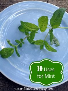 10 Uses for Mint including a great recipe on how to make a Strawberry Mint Face Mask!