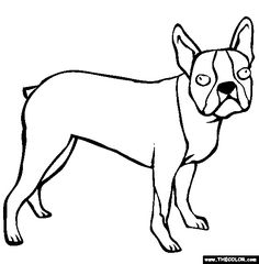 Boston Bull Terrier - Digital Download - Coloring Books for Adults ...