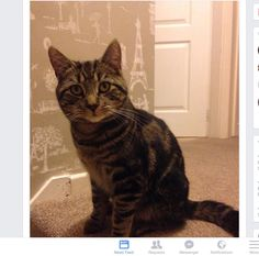 Male, Dark Tabby. Neutered and Chipped. Missing from Gnosall area of Stafford since Christmas Eve.