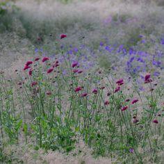 Grassentuin | opentuin | Chris Ghyselen - tuinarchitect