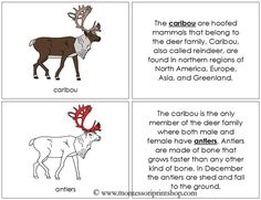 Caribou Nomenclature Book (in red): illustrates and describes 12 parts of the Caribou