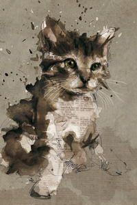 Abstract Kitten