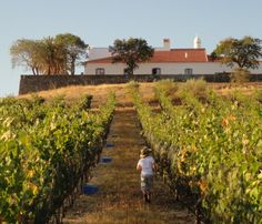 Herdade do Vau, Beja - Alentejo, Portugal - It is all about the wine, and the food and the fab hospitality