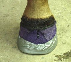 """hoof absess 