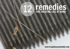 12 Remedies for Treating Lice at Home http://herbsandoilshub.com/12-remedies-for-treating-lice-at-home/  Learn all about lice and how to get rid of them naturally.