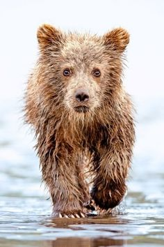 Grizzly Bear Cub, Alaska – Amazing Pictures - Amazing Travel Pictures with Maps for All Around the World