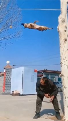 Funny Videos Clean, Crazy Funny Videos, Funny Dog Videos, Funny Animal Memes, Cute Baby Dogs, Cute Funny Dogs, Cute Funny Animals, Cute Animal Videos, Cute Animal Pictures