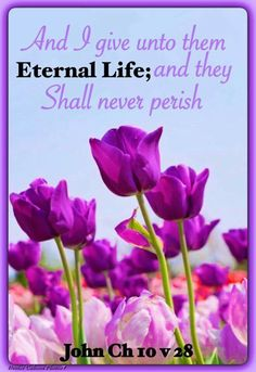 John 10:28 KJV And I give unto them eternal life; and they shall never perish,