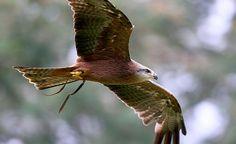 Bird flying at Spirits in the Sky presentation