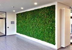 Eine Wand wie ein Waldboden, Grüne Mooswand, Hügelmoos, minimalistisch, puristisch