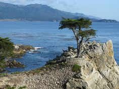 Lone Cypress, Monterey, California USA