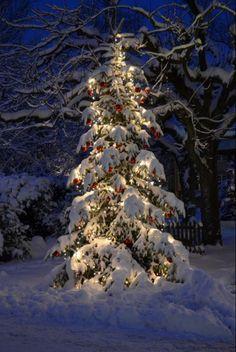 lit pine