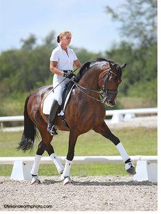GP Raymeister - KYB Dressage - Dressage Training - Dressage Horses For Sale