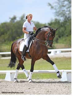 GP Raymeister - KYB Dressage - Dressage Training - Dressage Horses For Sale