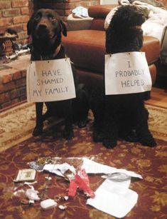 """ I have shamed my family."" & ""I probably helped.""   Funny Dog Shaming"