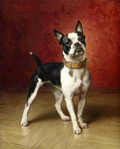 The early variety, century, French Bulldog was one of the ancestors of the Boston Terrier. Painting by Carl Reichert. Boston Terrier Kunst, Boston Terriers, Dachshund Funny, Famous Dogs, Illustration, Vintage Dog, Dog Portraits, Animal Paintings, Beautiful Dogs